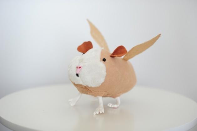 guinea (5)